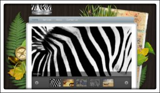 Dazzled Zebra Safari Company